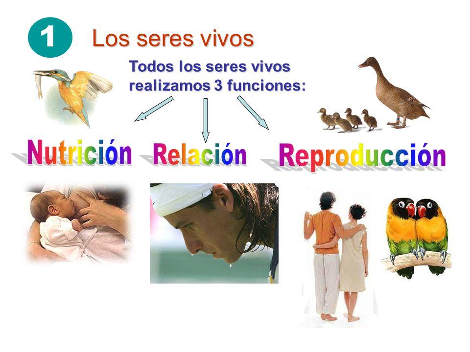 1 Los seres vivos Nutrición Relación Reproducción