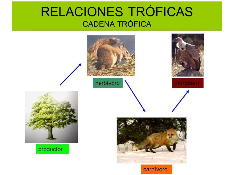 RELACIONES TRÓFICAS CADENA TRÓFICA