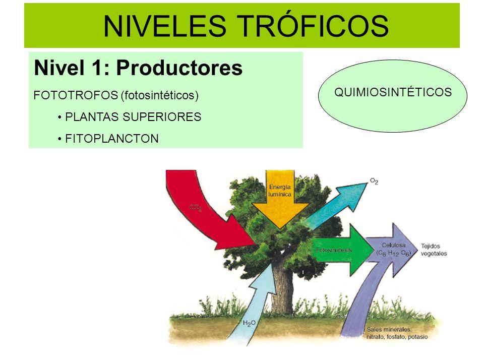 NIVELES TRÓFICOS Nivel 1: Productores FOTOTROFOS (fotosintéticos)