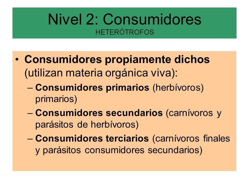 Nivel 2: Consumidores HETERÓTROFOS