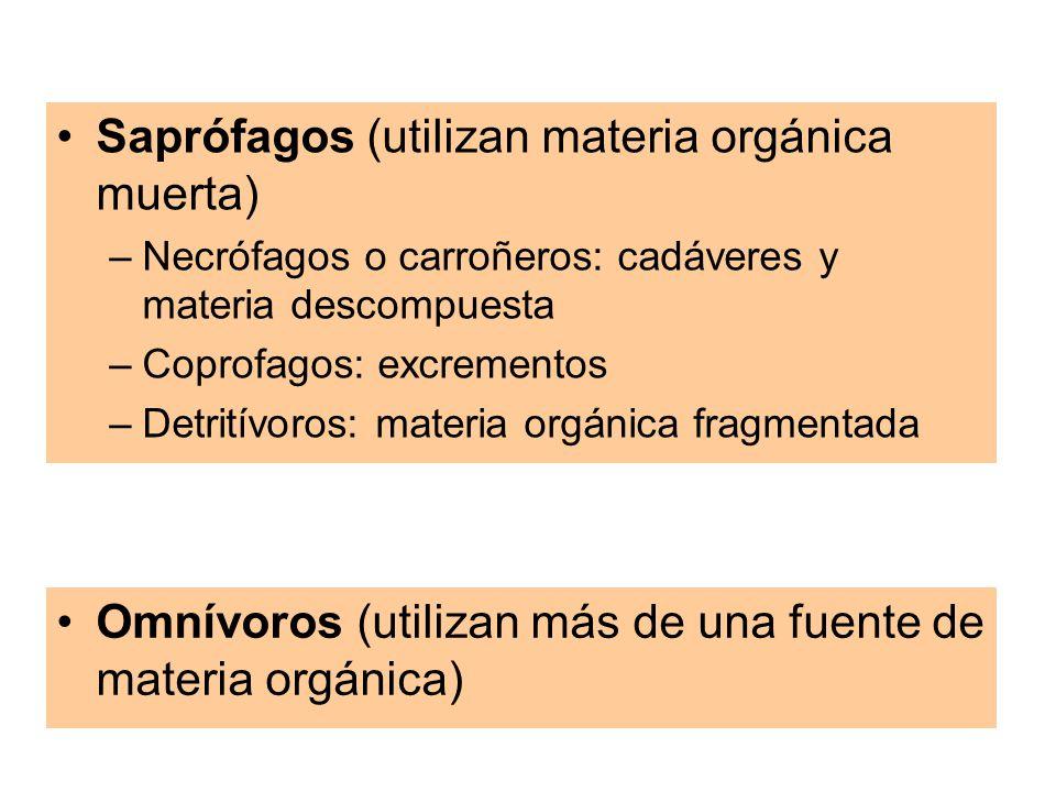 Saprófagos (utilizan materia orgánica muerta)