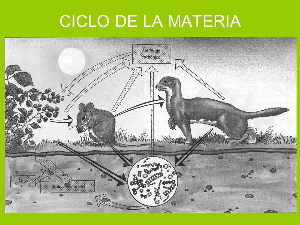 CICLO DE LA MATERIA