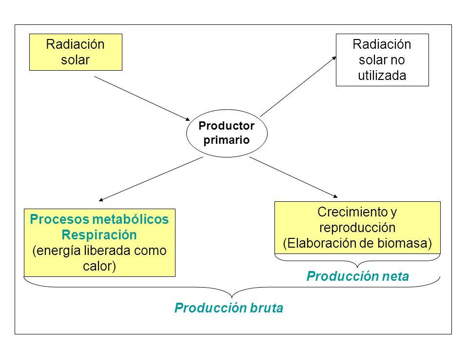 Procesos metabólicos Respiración Producción neta Producción bruta