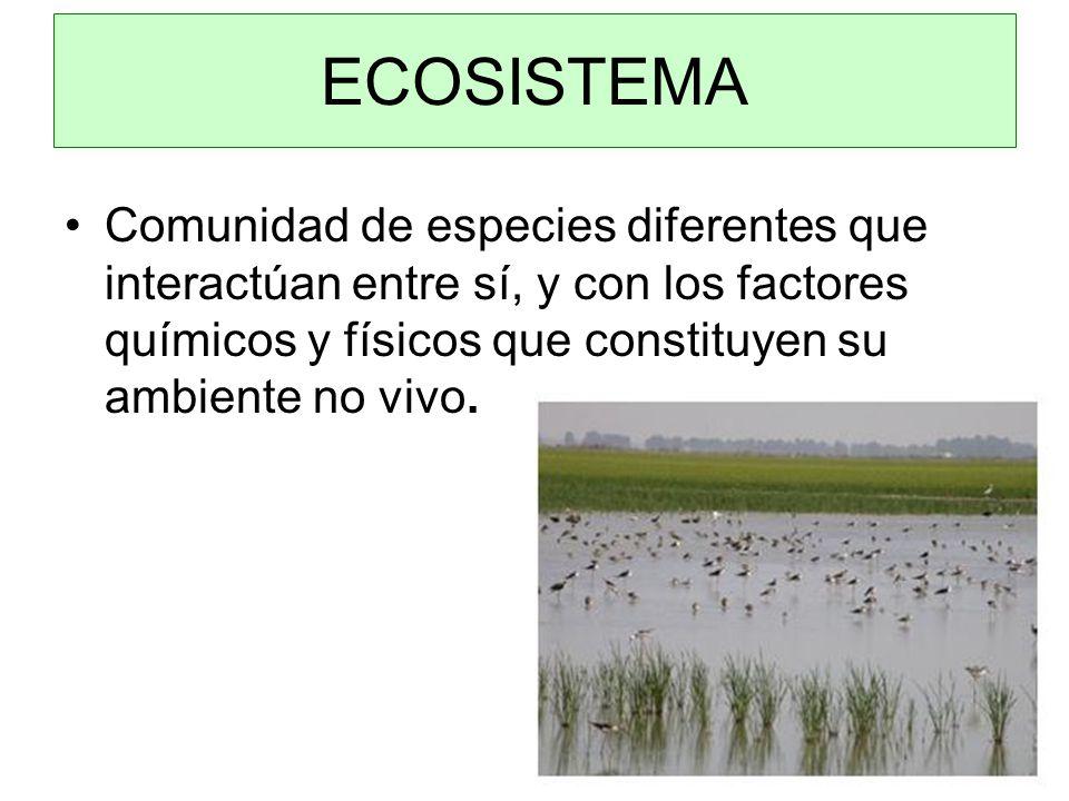 ECOSISTEMA Comunidad de especies diferentes que interactúan entre sí, y con los factores químicos y físicos que constituyen su ambiente no vivo.