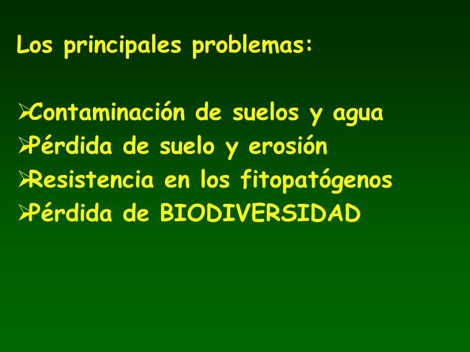 Los principales problemas: