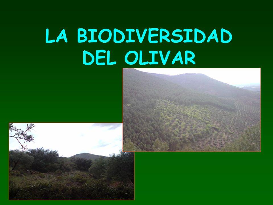 LA BIODIVERSIDAD DEL OLIVAR