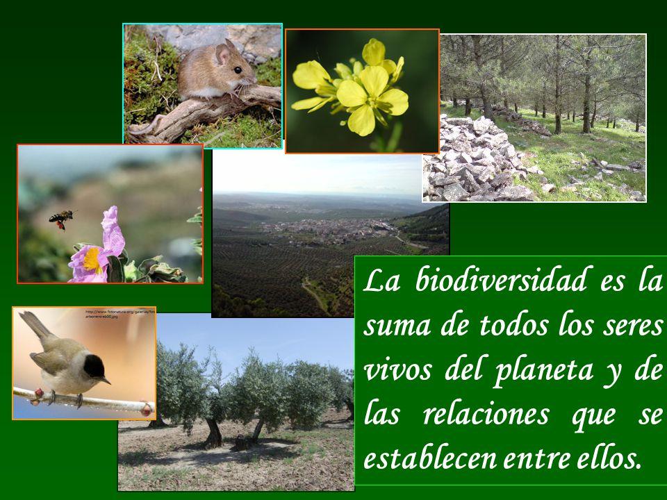 La biodiversidad es la suma de todos los seres vivos del planeta y de las relaciones que se establecen entre ellos.