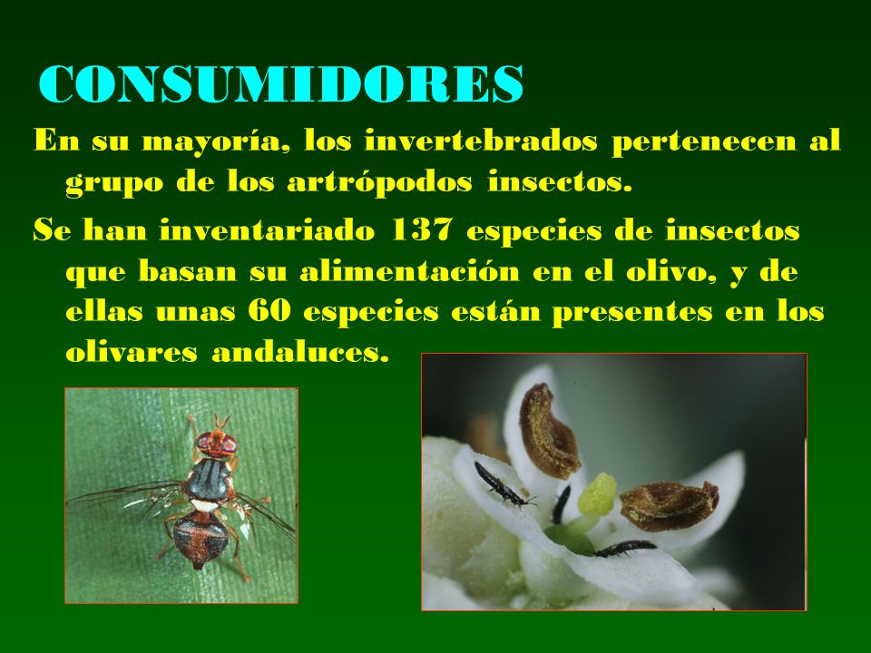 CONSUMIDORES En su mayoría, los invertebrados pertenecen al grupo de los artrópodos insectos.