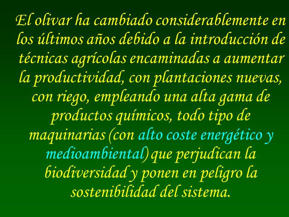 El olivar ha cambiado considerablemente en los últimos años debido a la introducción de técnicas agrícolas encaminadas a aumentar la productividad, con plantaciones nuevas, con riego, empleando una alta gama de productos químicos, todo tipo de maquinarias (con alto coste energético y medioambiental) que perjudican la biodiversidad y ponen en peligro la sostenibilidad del sistema.