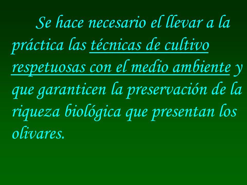 Se hace necesario el llevar a la práctica las técnicas de cultivo respetuosas con el medio ambiente y que garanticen la preservación de la riqueza biológica que presentan los olivares.