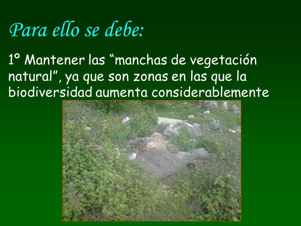 Para ello se debe: 1º Mantener las manchas de vegetación natural , ya que son zonas en las que la biodiversidad aumenta considerablemente.