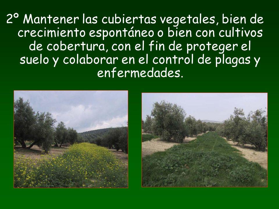2º Mantener las cubiertas vegetales, bien de crecimiento espontáneo o bien con cultivos de cobertura, con el fin de proteger el suelo y colaborar en el control de plagas y enfermedades.