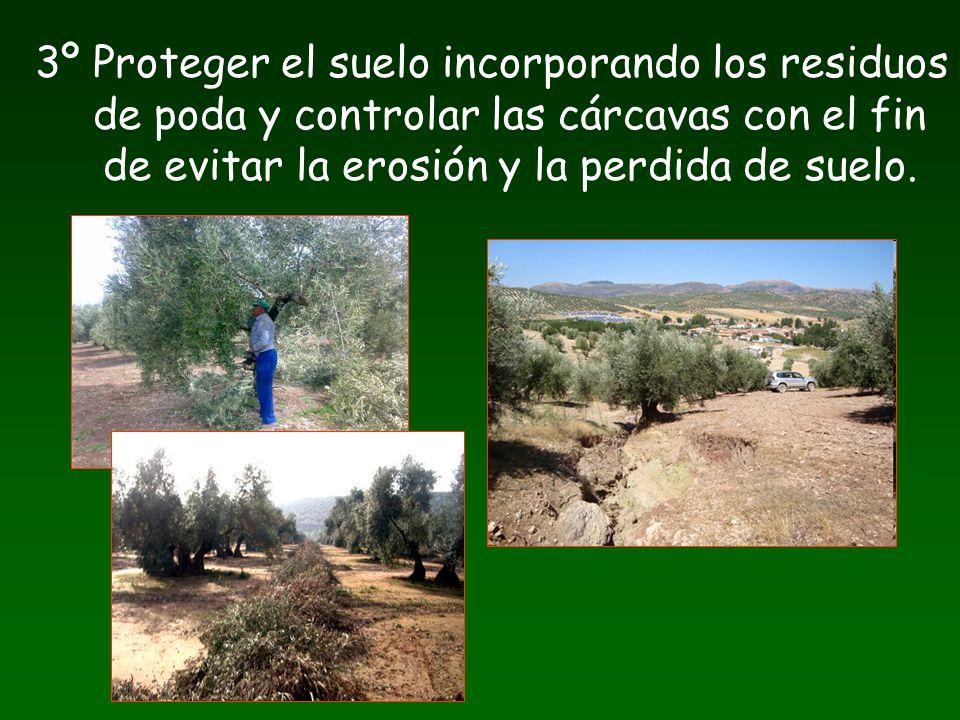 3º Proteger el suelo incorporando los residuos de poda y controlar las cárcavas con el fin de evitar la erosión y la perdida de suelo.