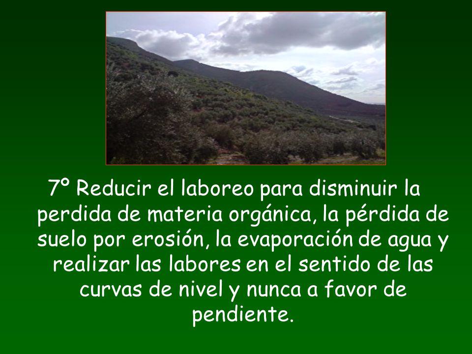 7º Reducir el laboreo para disminuir la perdida de materia orgánica, la pérdida de suelo por erosión, la evaporación de agua y realizar las labores en el sentido de las curvas de nivel y nunca a favor de pendiente.