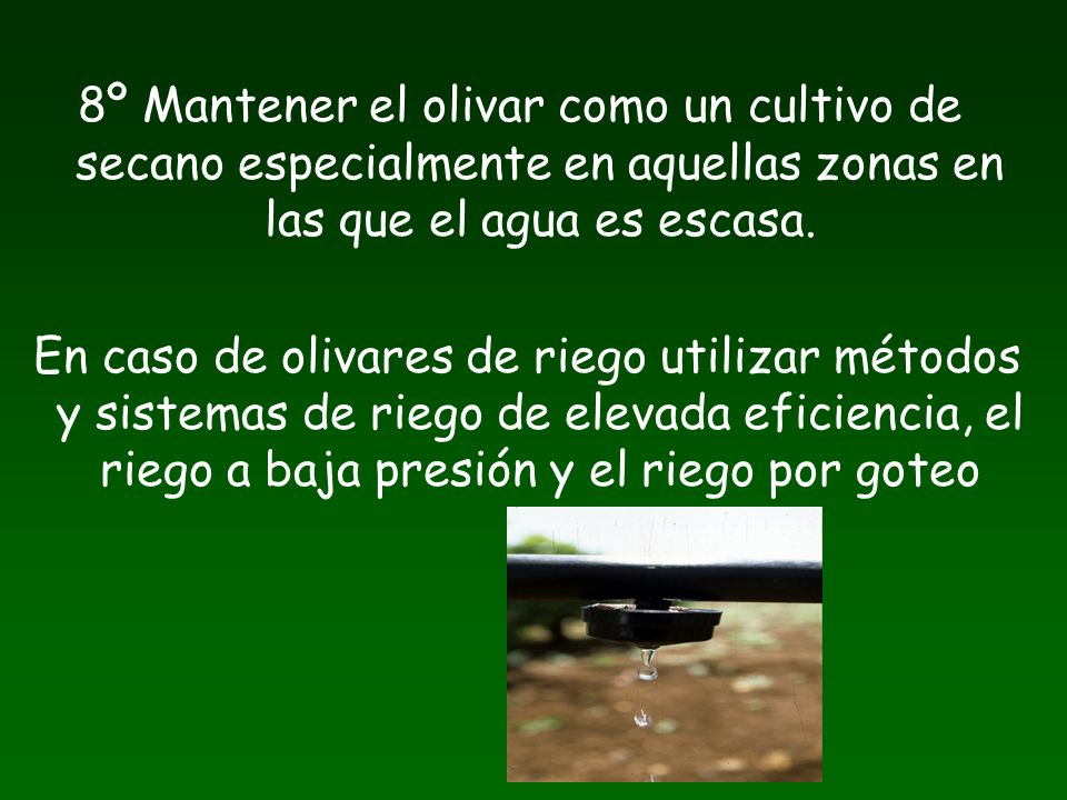 8º Mantener el olivar como un cultivo de secano especialmente en aquellas zonas en las que el agua es escasa.