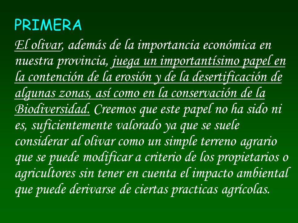 PRIMERA
