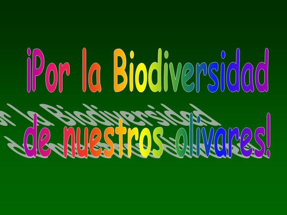¡Por la Biodiversidad de nuestros olivares!