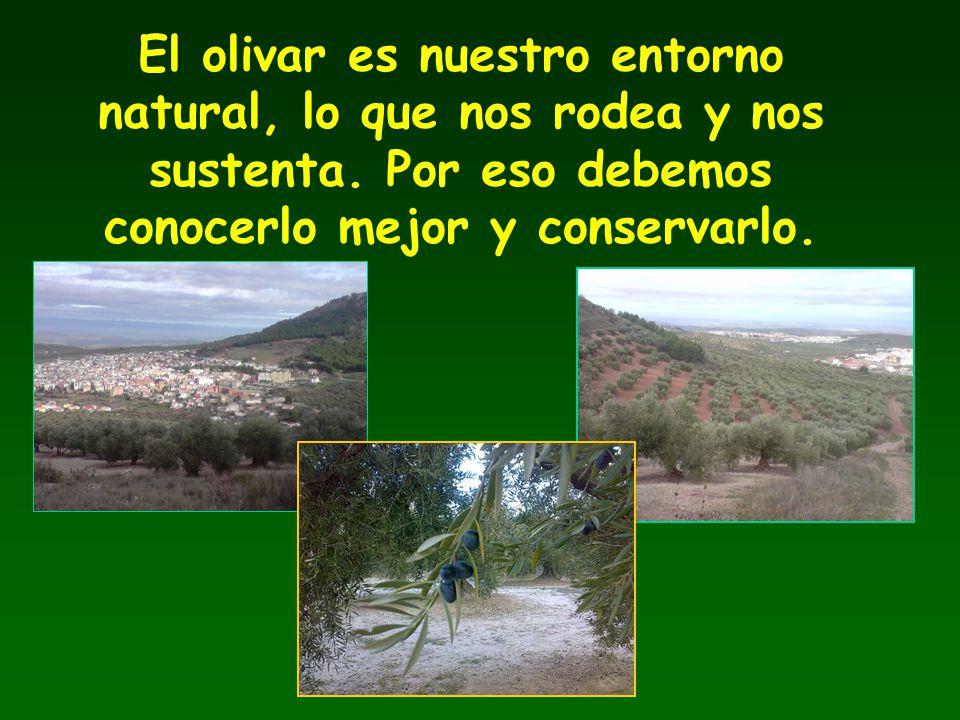 El olivar es nuestro entorno natural, lo que nos rodea y nos sustenta