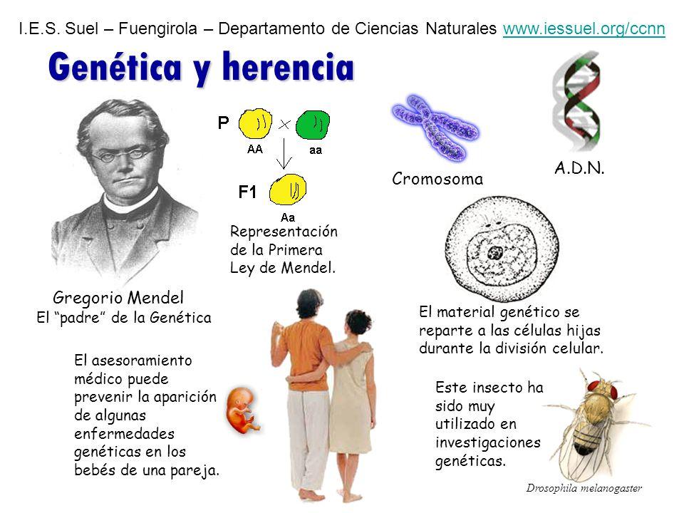 I. E. S. Suel – Fuengirola – Departamento de Ciencias Naturales www