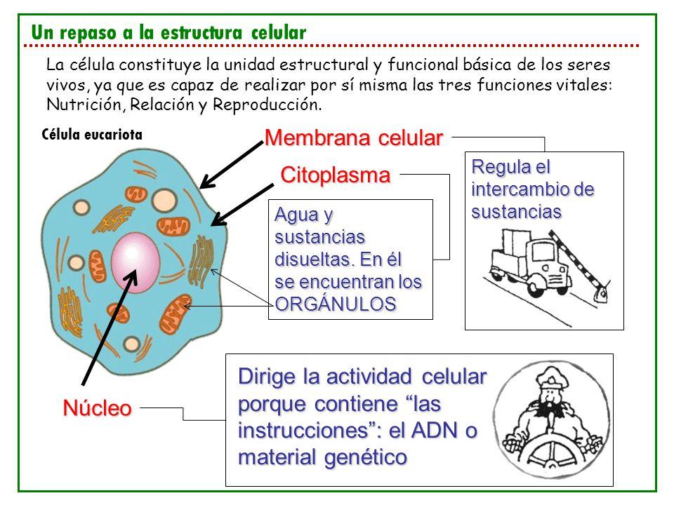 Un repaso a la estructura celular