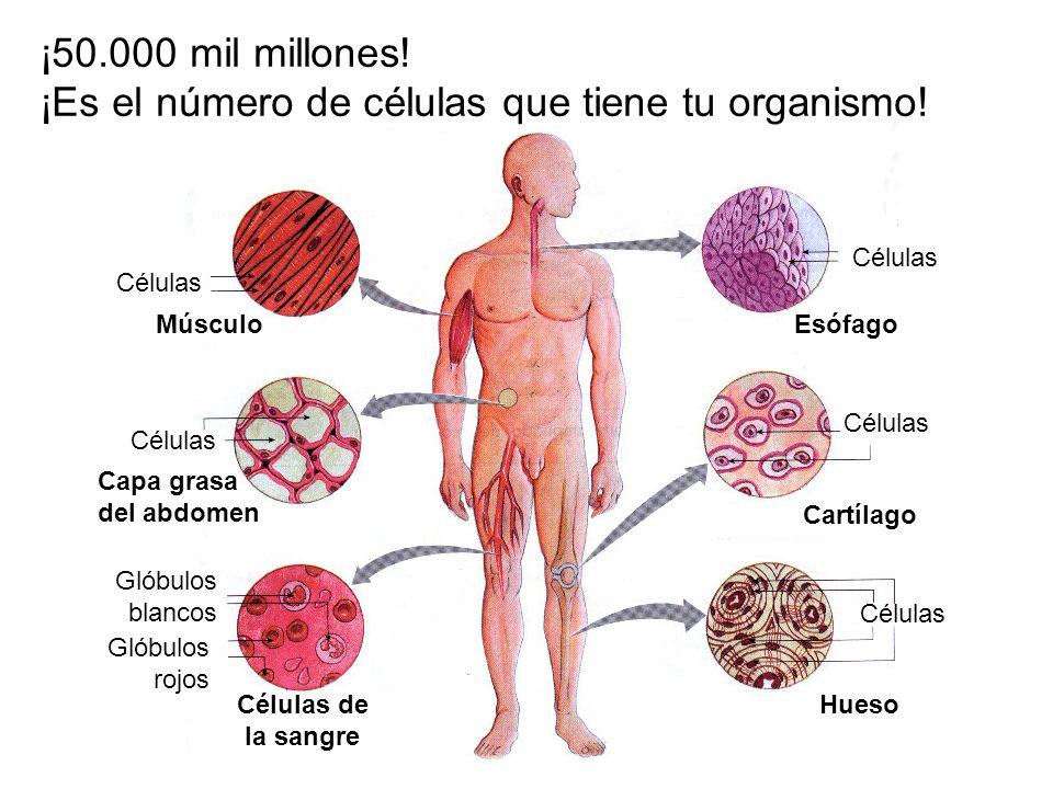 ¡Es el número de células que tiene tu organismo!