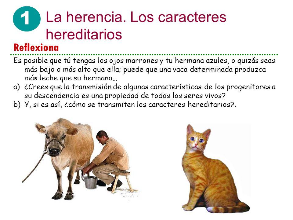 1 La herencia. Los caracteres hereditarios Reflexiona