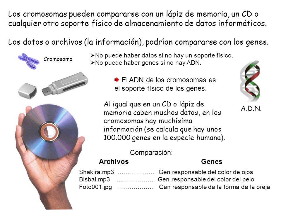 Los cromosomas pueden compararse con un lápiz de memoria, un CD o cualquier otro soporte físico de almacenamiento de datos informáticos.