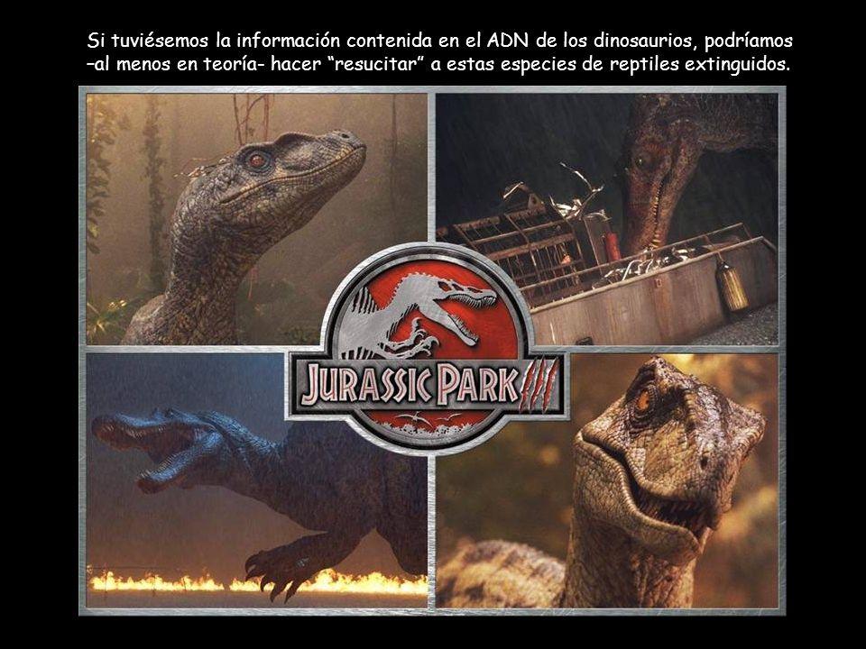 Si tuviésemos la información contenida en el ADN de los dinosaurios, podríamos –al menos en teoría- hacer resucitar a estas especies de reptiles extinguidos.