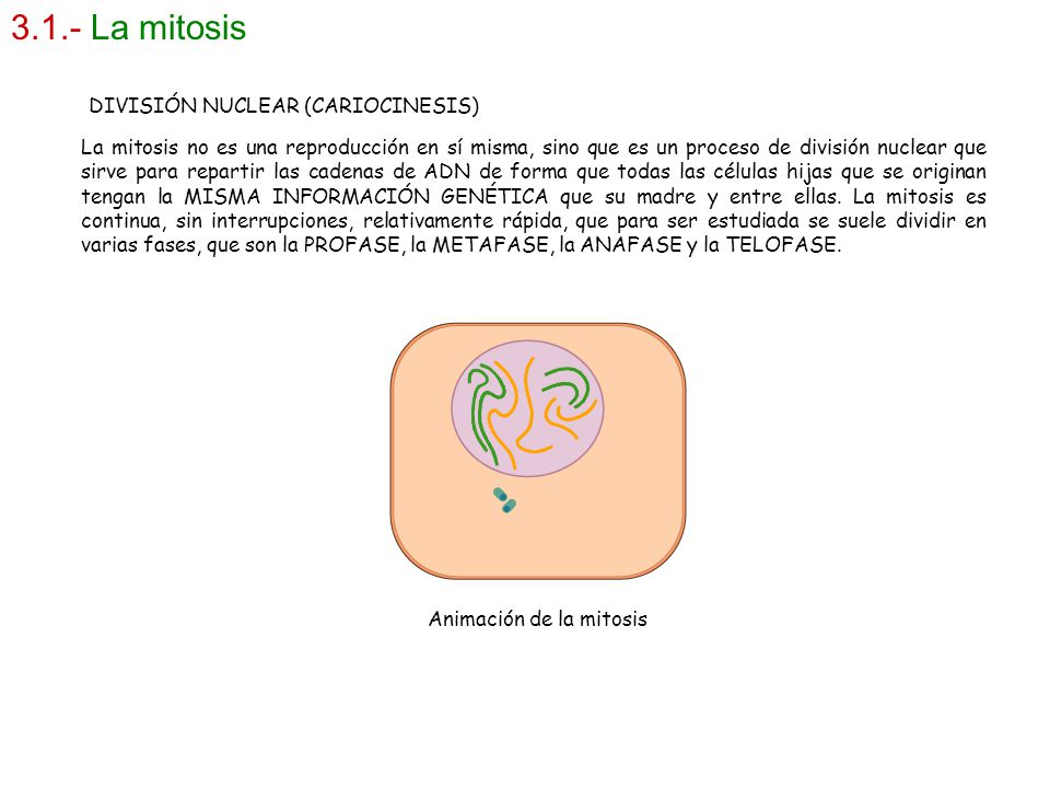 3.1.- La mitosis DIVISIÓN NUCLEAR (CARIOCINESIS)