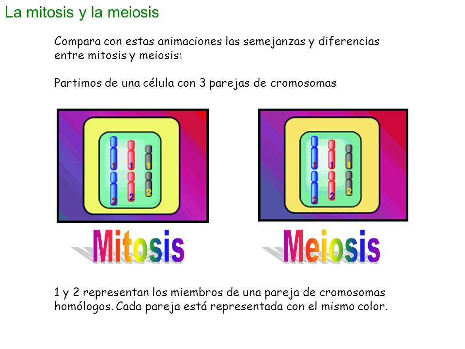 Mitosis Meiosis La mitosis y la meiosis