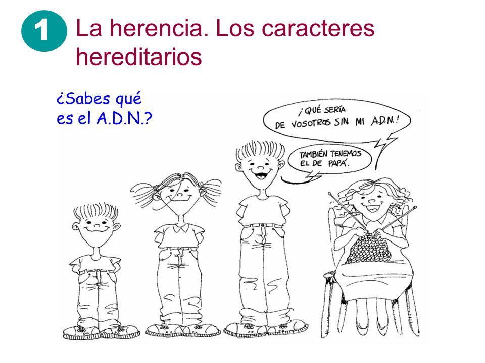 1 La herencia. Los caracteres hereditarios ¿Sabes qué es el A.D.N.