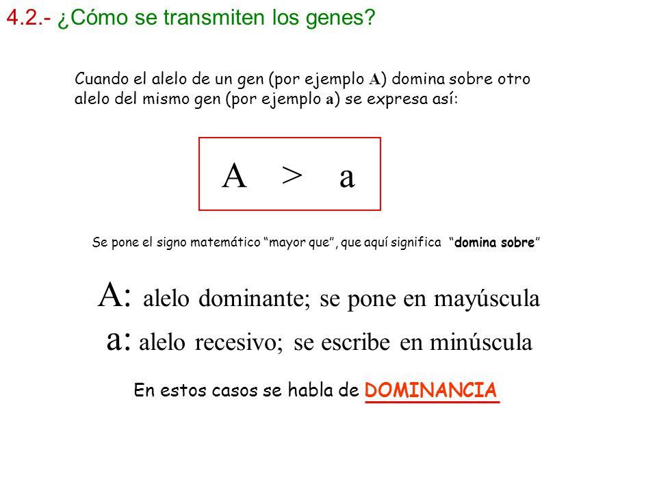 A: alelo dominante; se pone en mayúscula
