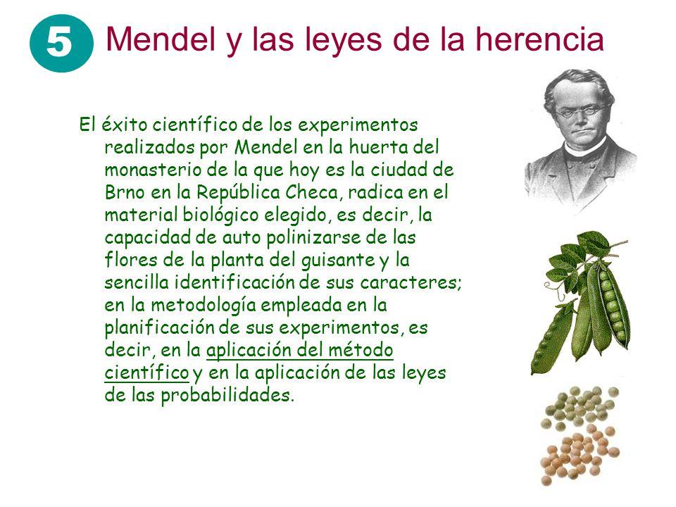 5 Mendel y las leyes de la herencia