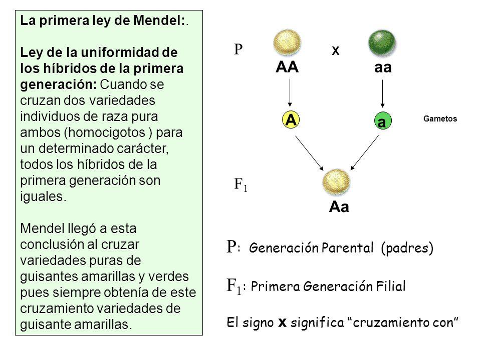 P: Generación Parental (padres) F1: Primera Generación Filial