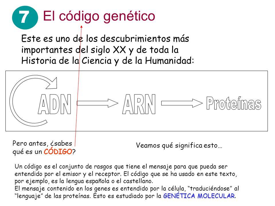 7 El código genético ADN ARN Proteínas