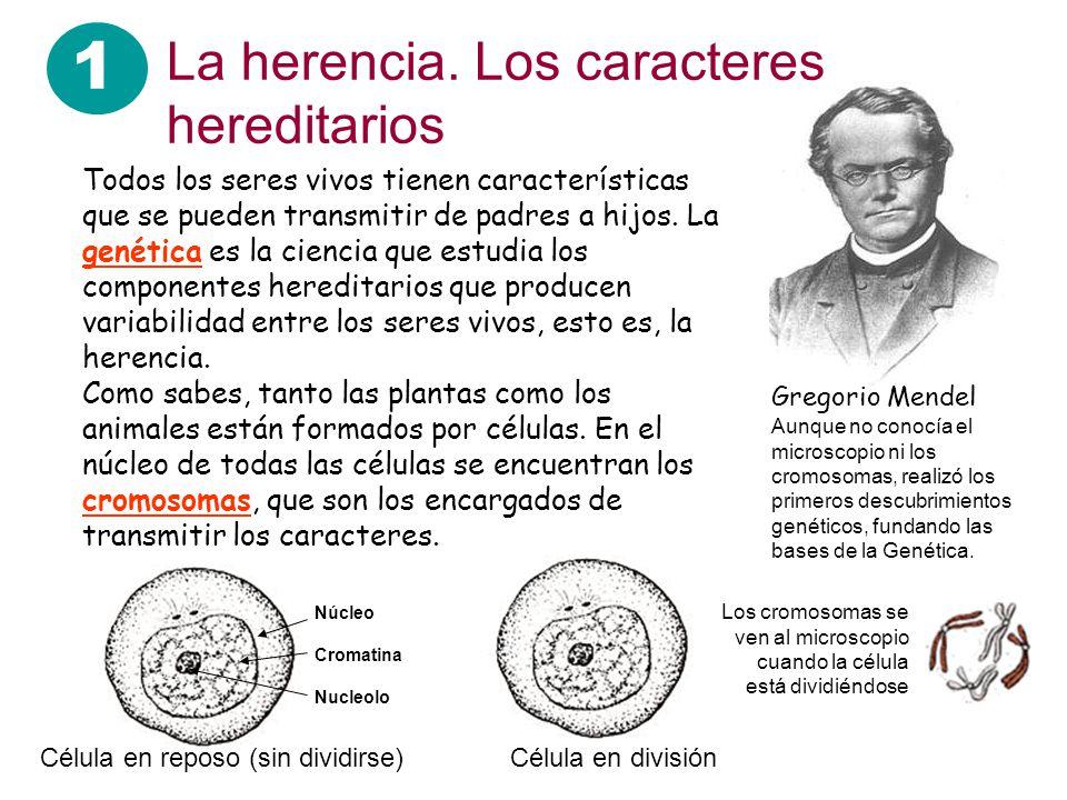 1 La herencia. Los caracteres hereditarios