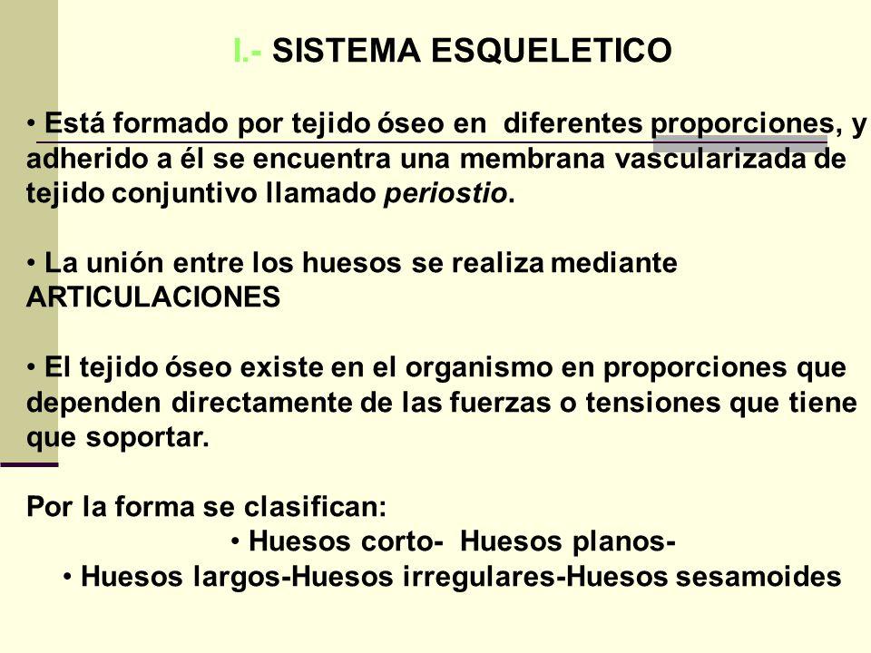 I.- SISTEMA ESQUELETICO
