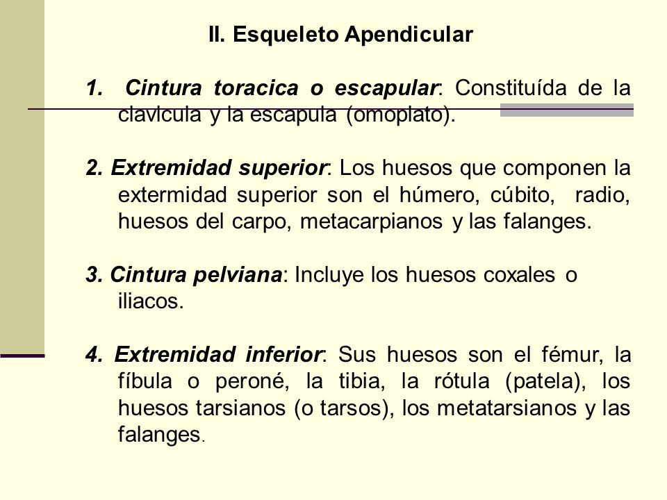 II. Esqueleto Apendicular