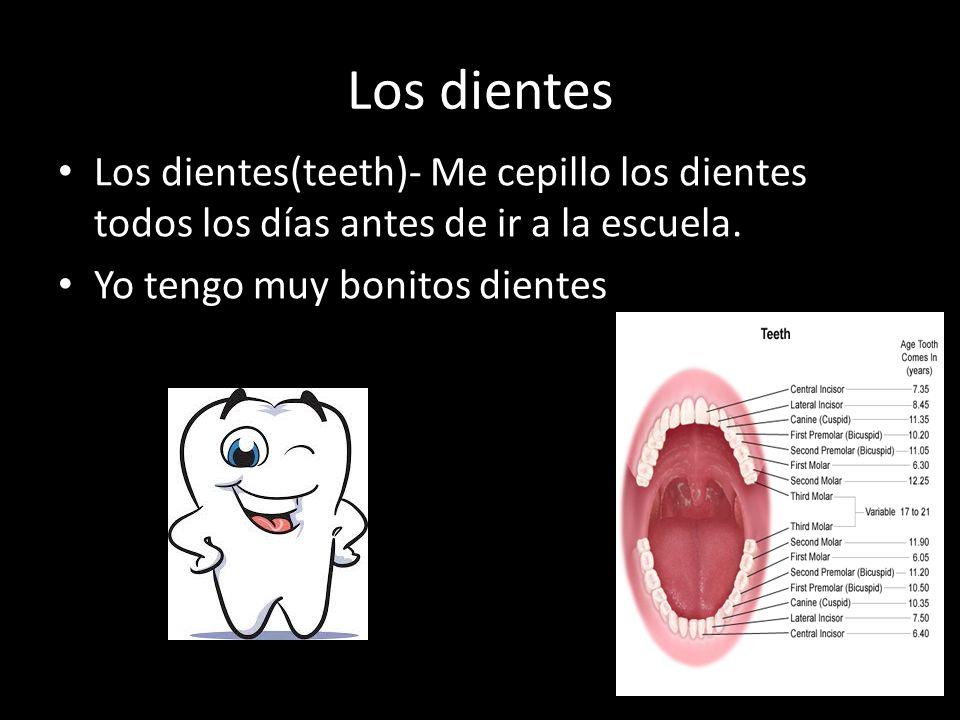 Los dientes Los dientes(teeth)- Me cepillo los dientes todos los días antes de ir a la escuela.