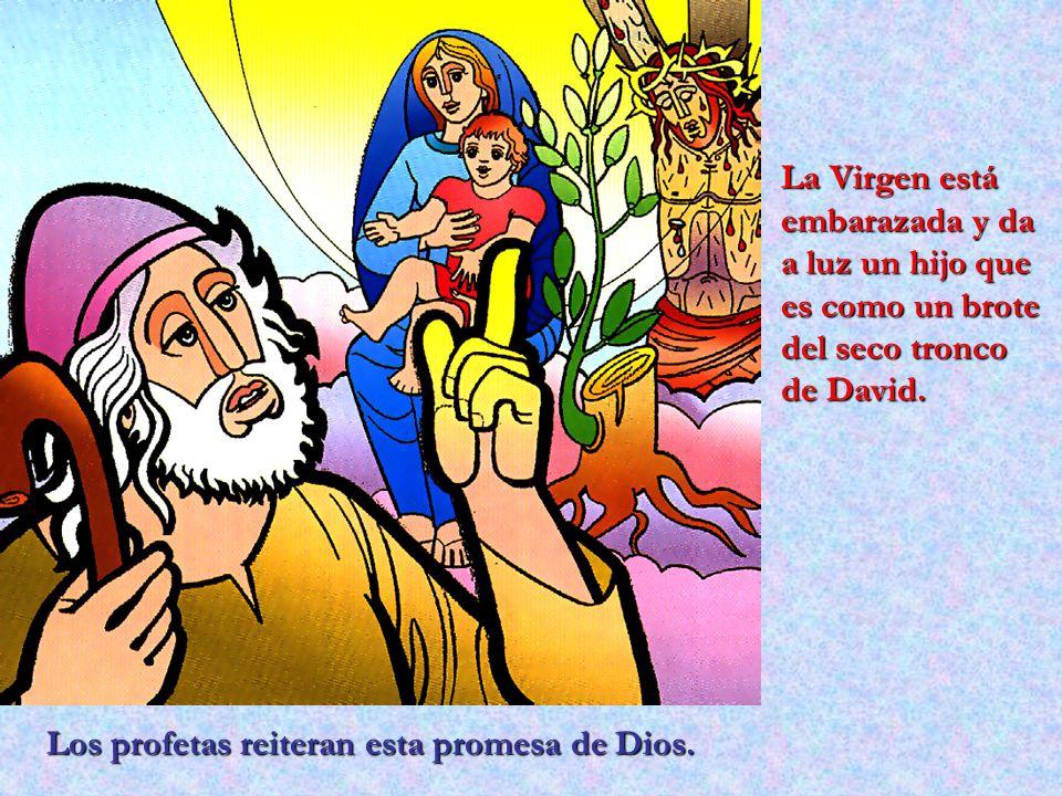 La Virgen está embarazada y da a luz un hijo que es como un brote del seco tronco de David.
