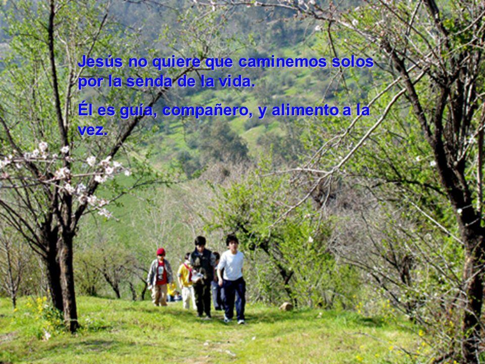 Jesús no quiere que caminemos solos por la senda de la vida.