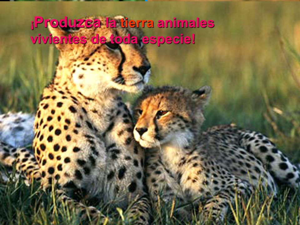 Sábado ¡Produzca la tierra animales vivientes de toda especie!