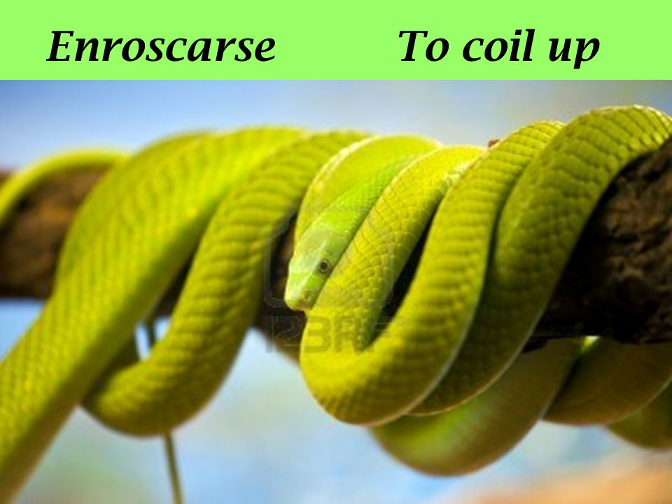 Enroscarse To coil up