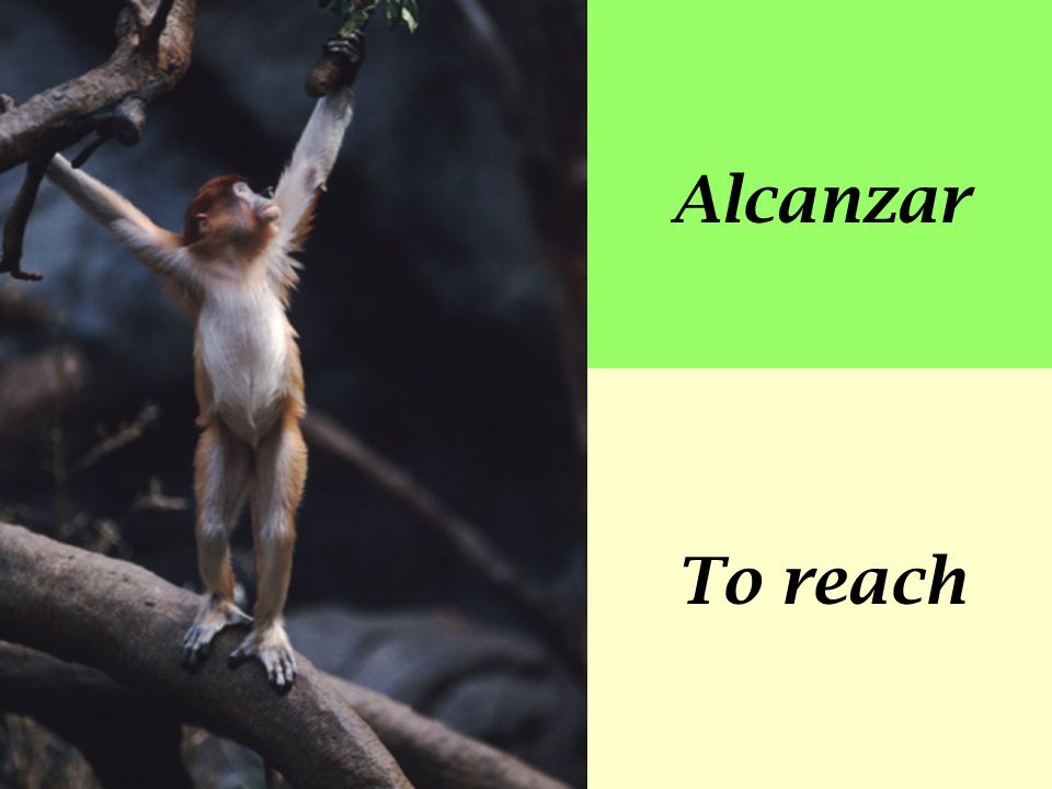 Alcanzar To reach