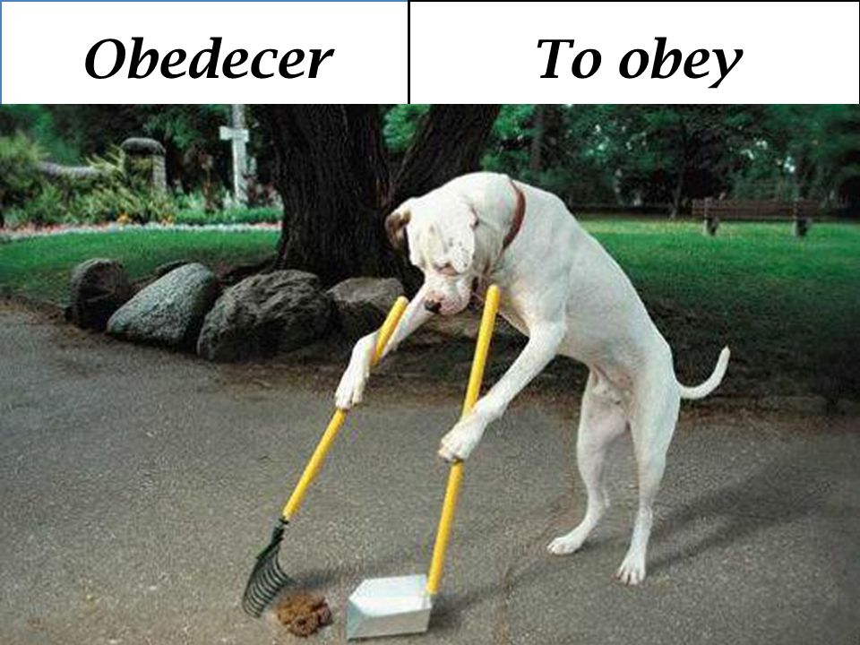 Obedecer To obey