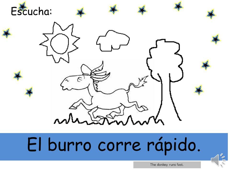Escucha: El burro corre rápido. The donkey runs fast.
