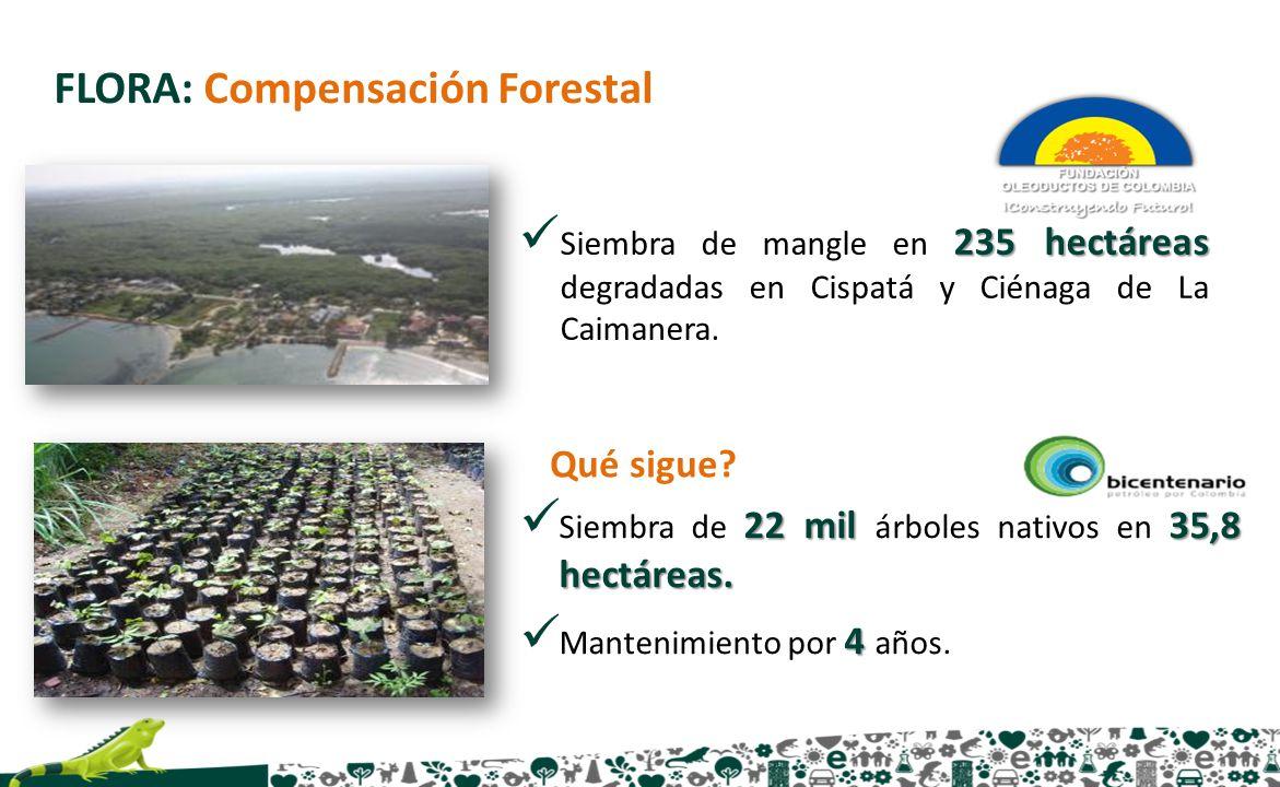 FLORA: Compensación Forestal