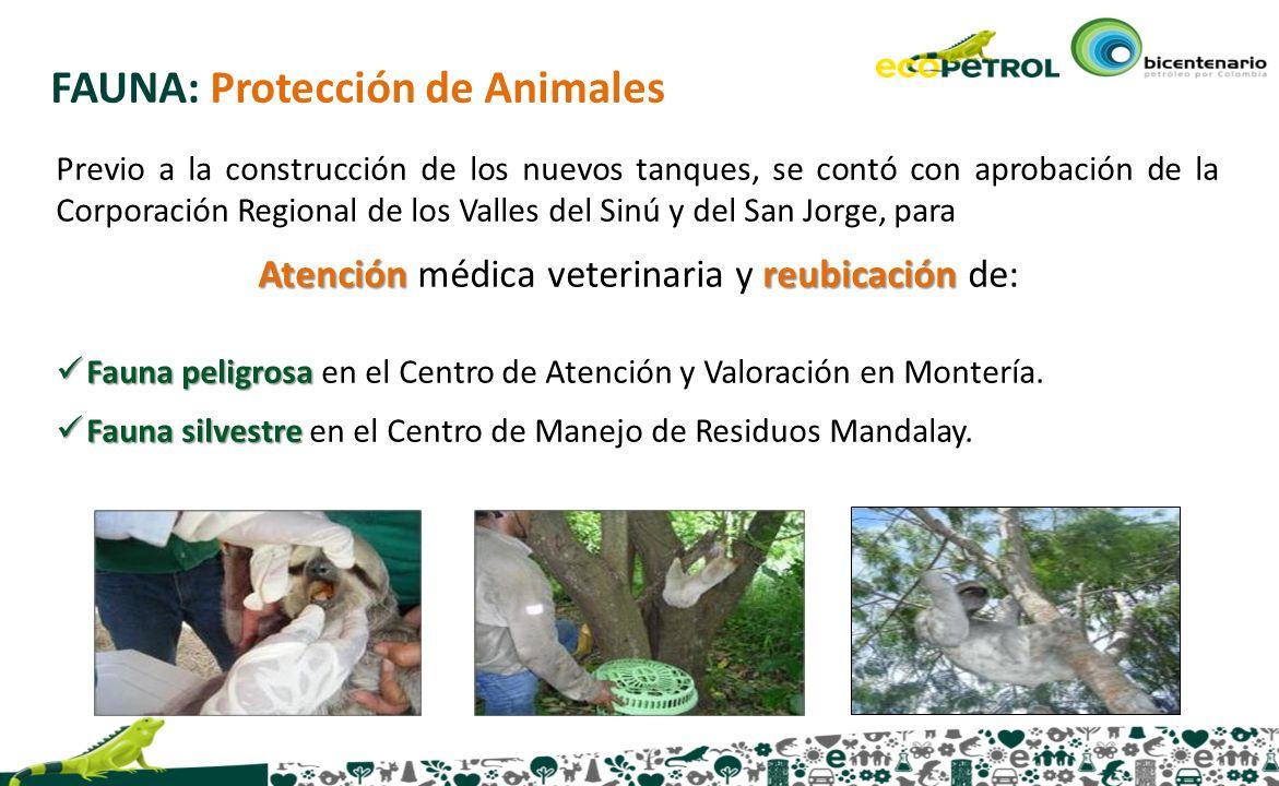 Atención médica veterinaria y reubicación de: