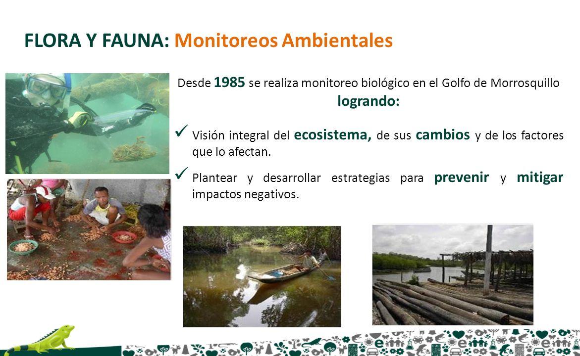 FLORA Y FAUNA: Monitoreos Ambientales
