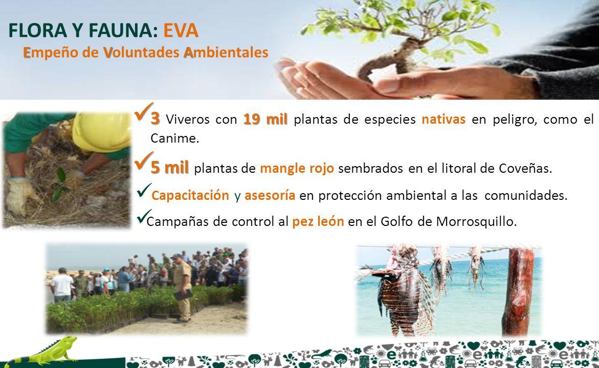FLORA Y FAUNA: EVA Empeño de Voluntades Ambientales. 3 Viveros con 19 mil plantas de especies nativas en peligro, como el Canime.